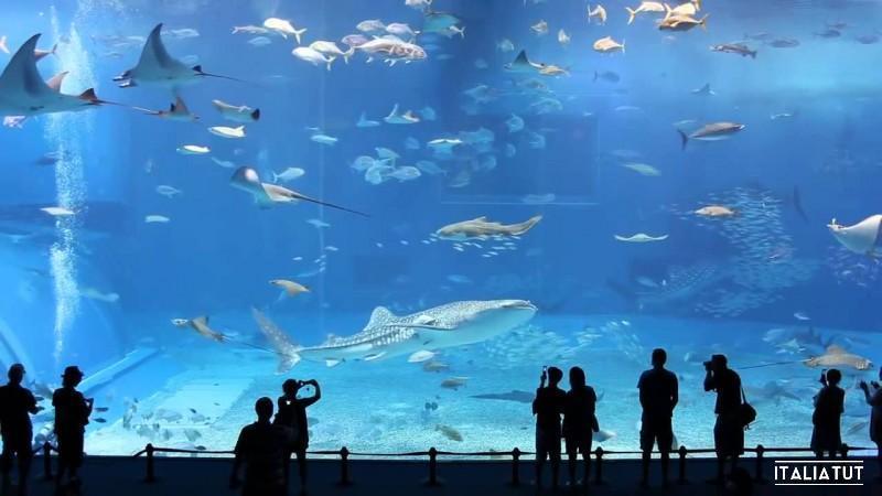 I-10-acquari-più-grandi-del-mondo